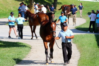 Keeneland Catalogs 4,644 Yearlings for 2019 September Sale